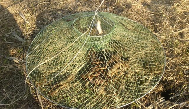 Двойная открытая ловушка достаточно удобная при ловле добычи